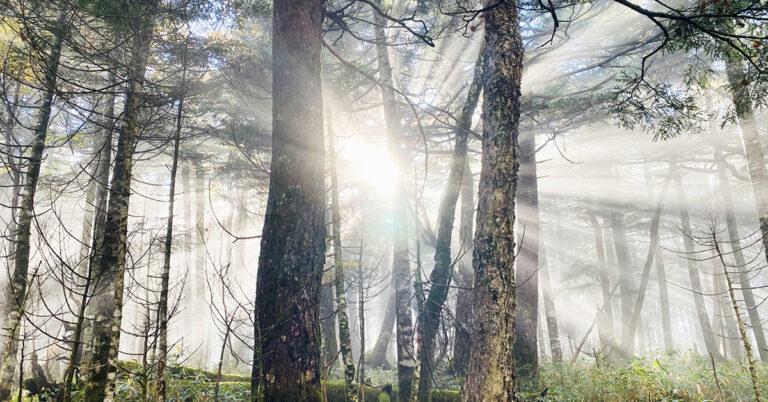 木質バイオマスと環境保全について